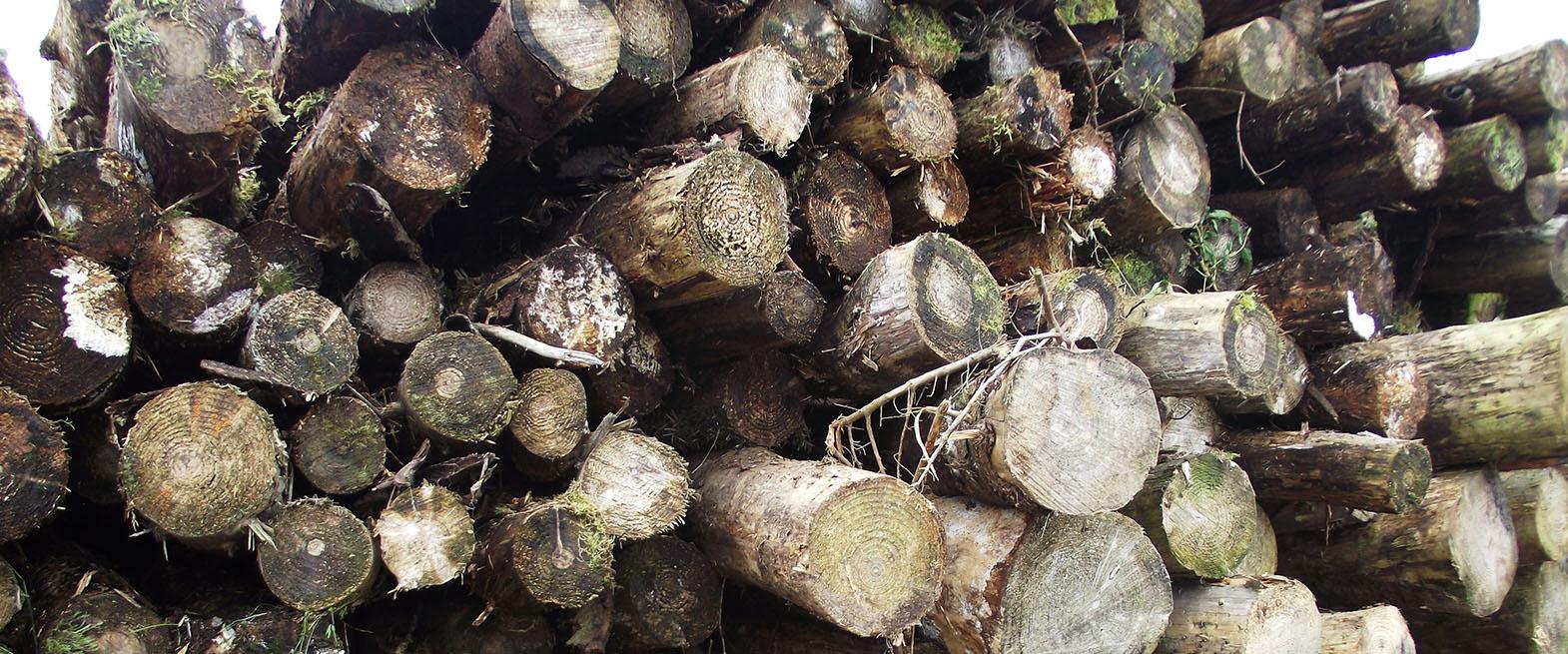 Forestry_Slide1