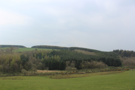 Woodlands for Sale between Dumfries and Dunscore
